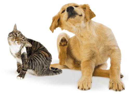 9 dicas para prevenir a infestação no cão e no gato
