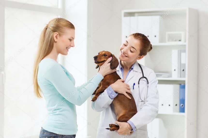 Dicas para perceber se o seu animal está a precisar de cuidados do veterinário