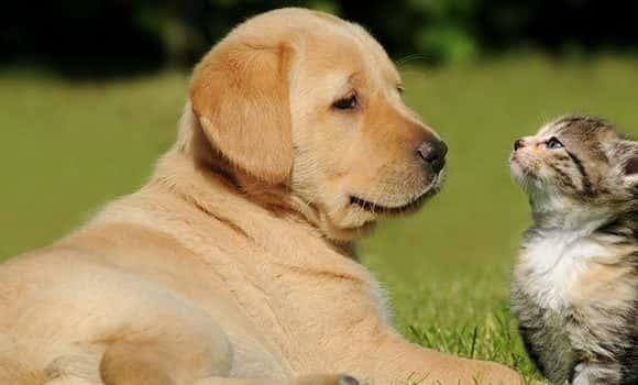 Os benefícios de ter um cão