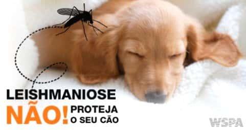 Dicas para prevenir a leishmaniose canina